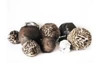 lucasvanvugt design fur